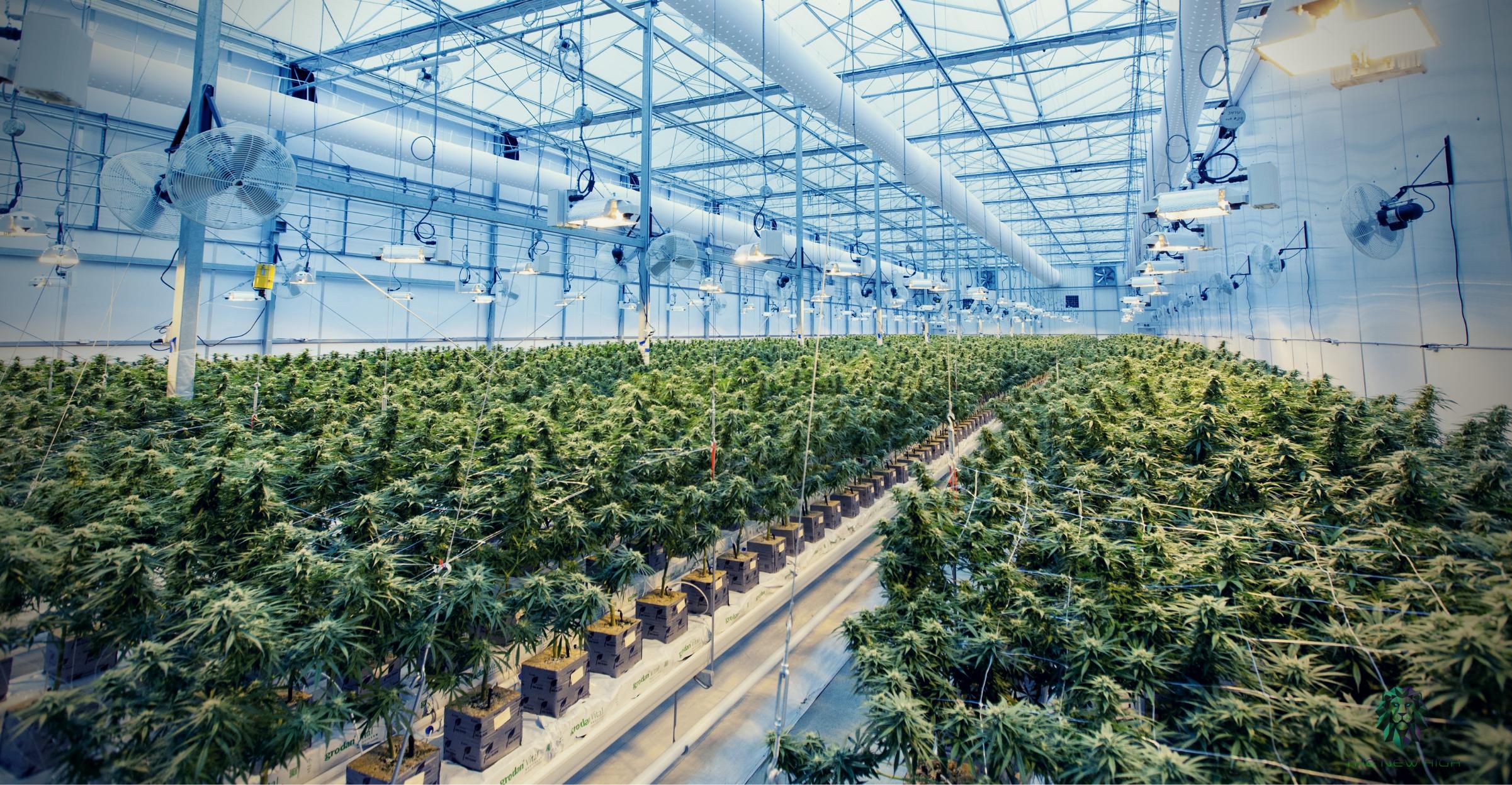 cannabis-erp